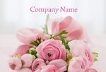 цветы пионы розовые праздник