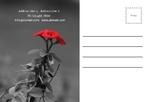 праздник цветы флорист 8 марта