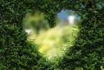 любовь зелень